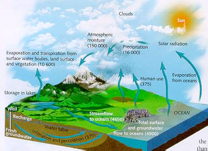 Carbon Cycle Kids Science